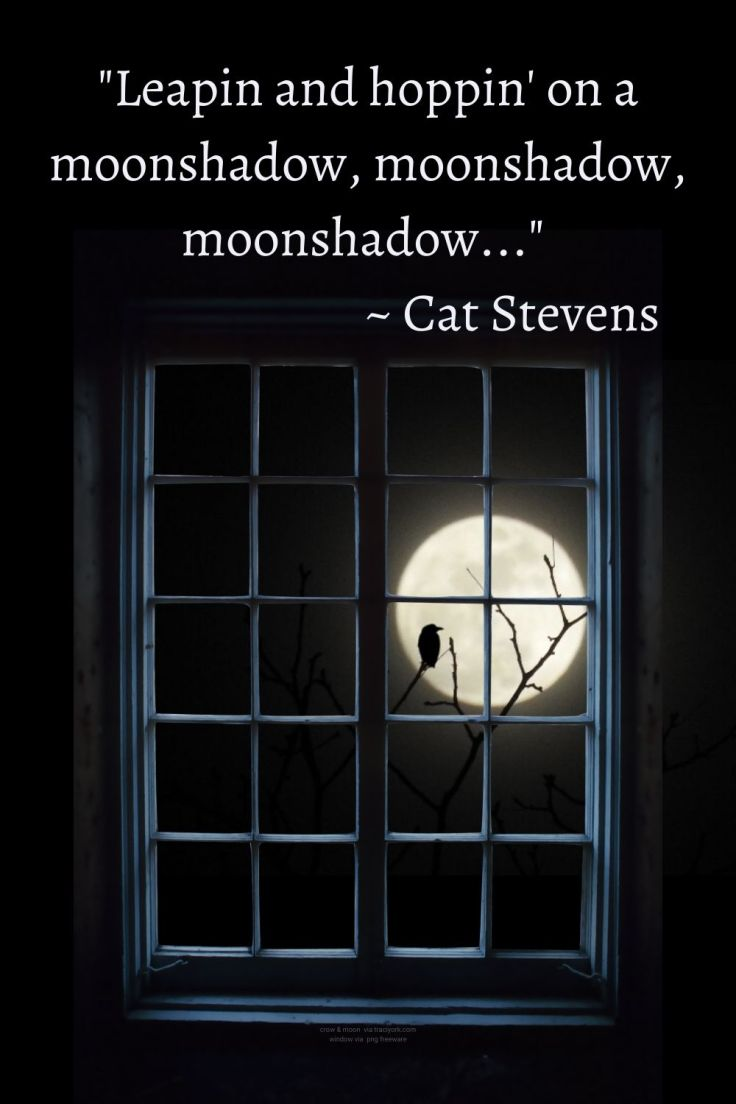 Moonshaow - Quotes with My crow-moon photo with png freeware window