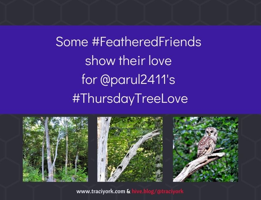 Some FeatheredFriends show their love for parul2411's ThursdayTreeLoveblog thumbnail