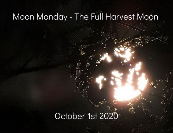 Twelve more photos of the Full Harvest Moon October 1st 2020 blog thumbnail