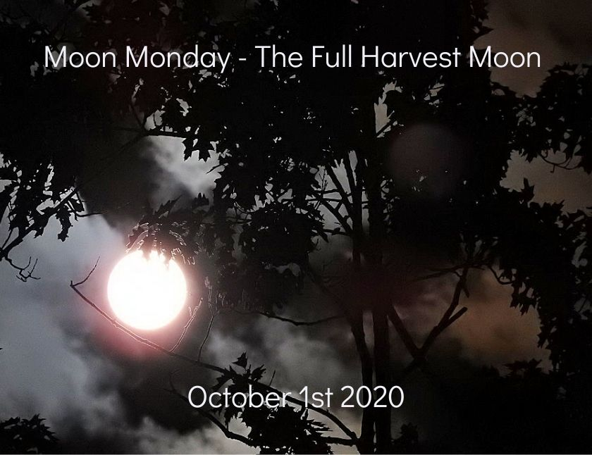 Last set of photos of the Full Harvest Moon October 1st 2020 blog thumbnail