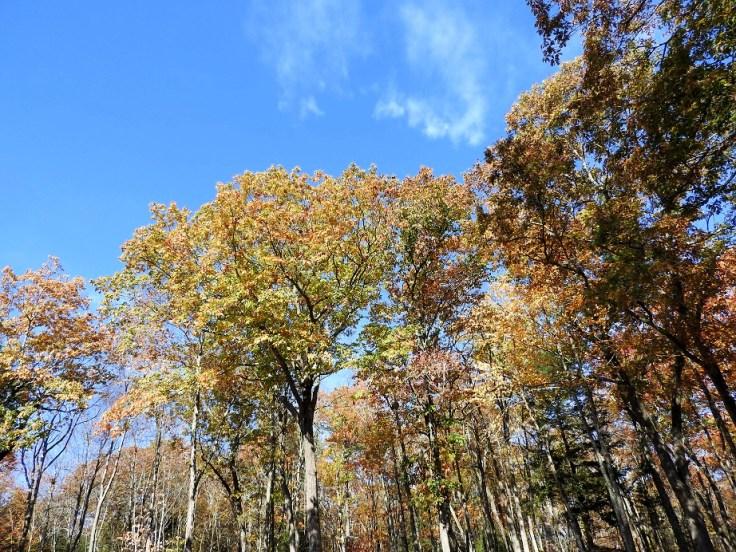 1. Five Fall Foliage Photos
