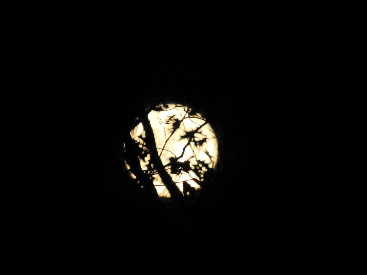 second set of the Halloween Blue Hunter's Full Moon October 31st 2020