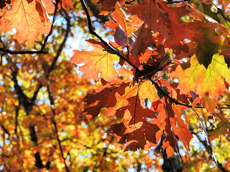 4. Five Fall Foliage Photos