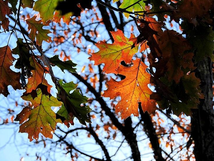 5. Five Fall Foliage Photos