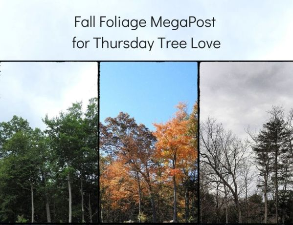 Fall Foliage MegaPost blog thumbnail