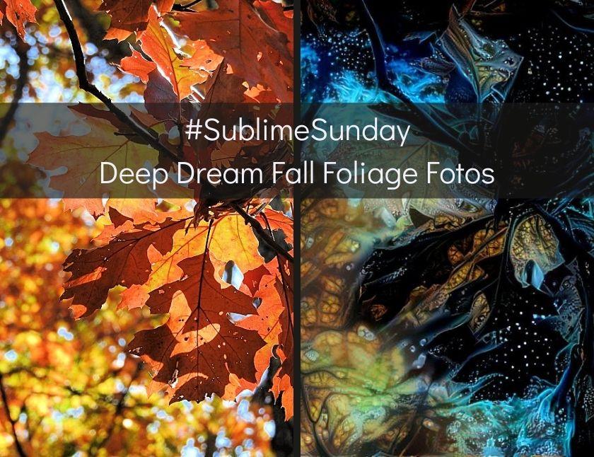 #SublimeSunday - Deep Dream Fall Foliage Fotos blog thumbnail