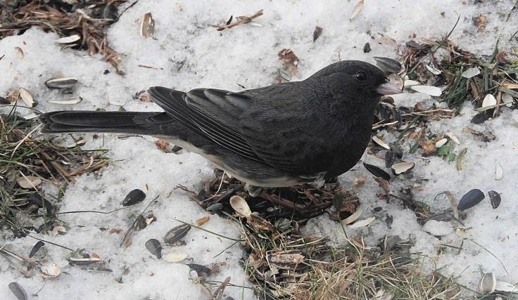 Birds at my Feeder