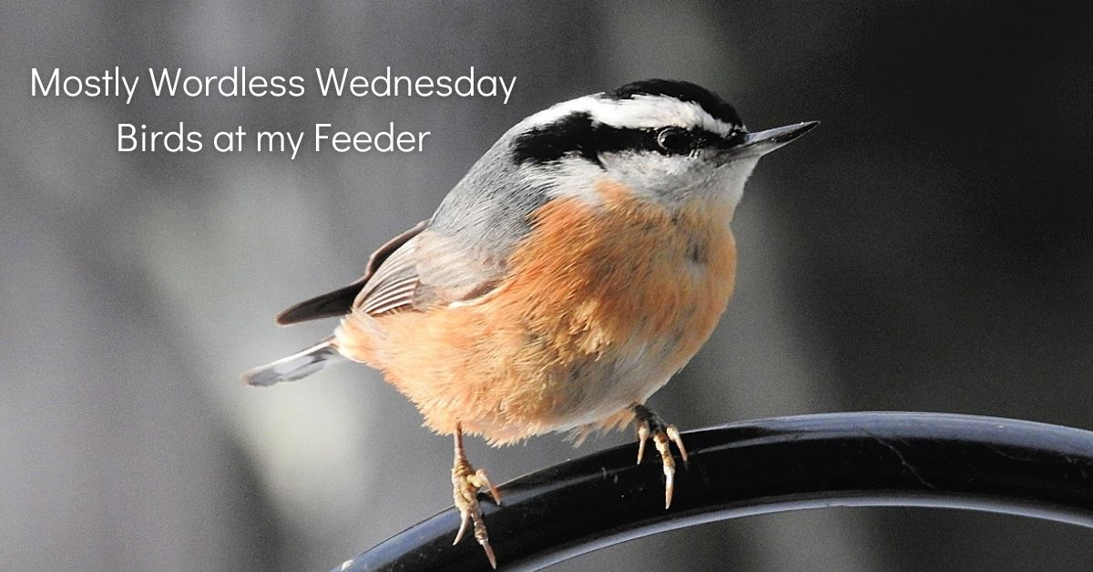 Mostly #WordlessWednesday - Birds at my Feeder blog thumbnail 1200 x 620, optimum WP size