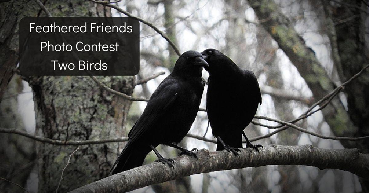 Two Birds blog thumbnail