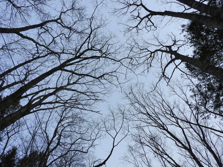 Trees Along the Driveway