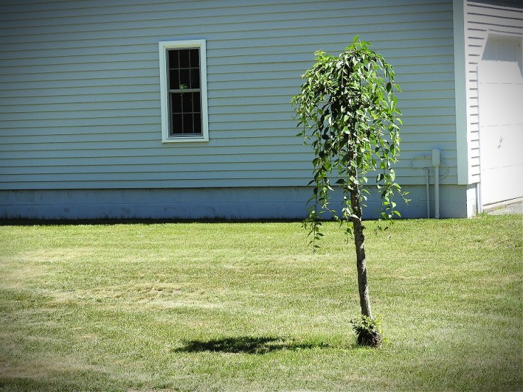 our landlady's memorial tree
