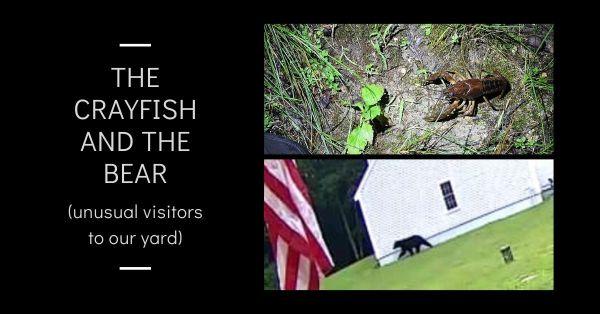 The Crayfish and the Bear blog thumbnail