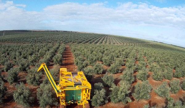 Maquinaria olivar superintensivo