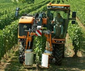 Podadoras en viñedo: todo sobre Prepodadoras, Despuntadoras y Tijeras de poda