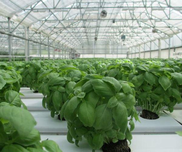 Aplicación de productos fitosanitarios en invernaderos.
