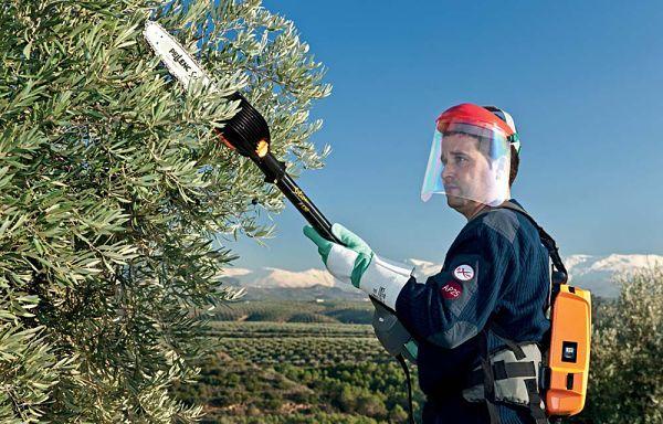 Poda de altura en olivo con Pellenc Selion