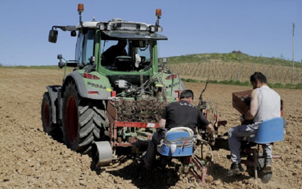 Plantación semi-mecanizada