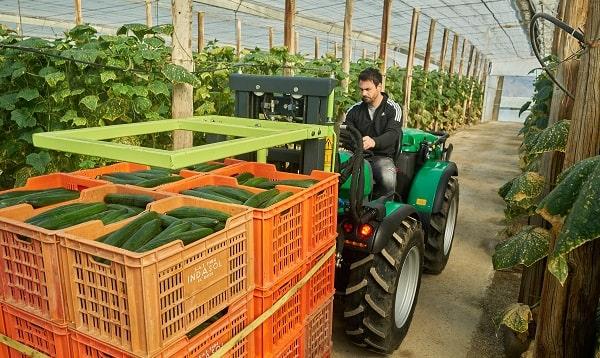 Tractor Ferrari reversible cargando pepinos dentro de un invernadero