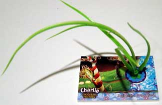 2005 Artbox Charlie and the Chocolate Factory Prop Cards Long Grass from Factory (95)