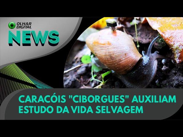 """Ao Vivo   Caracóis """"ciborgues"""" auxiliam estudo da vida selvagem   16/06/2021   #OlharDigital"""