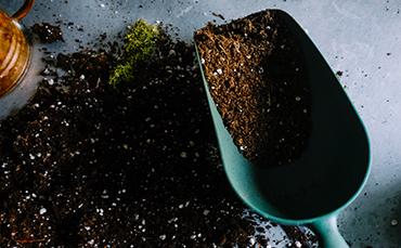 Trädgårdsbutiken Plantskolan i Vellinge - plantering