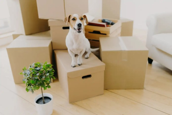 Dog-and-packing-boxes-moving-home