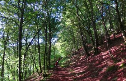 Un petit passage dans la forêt