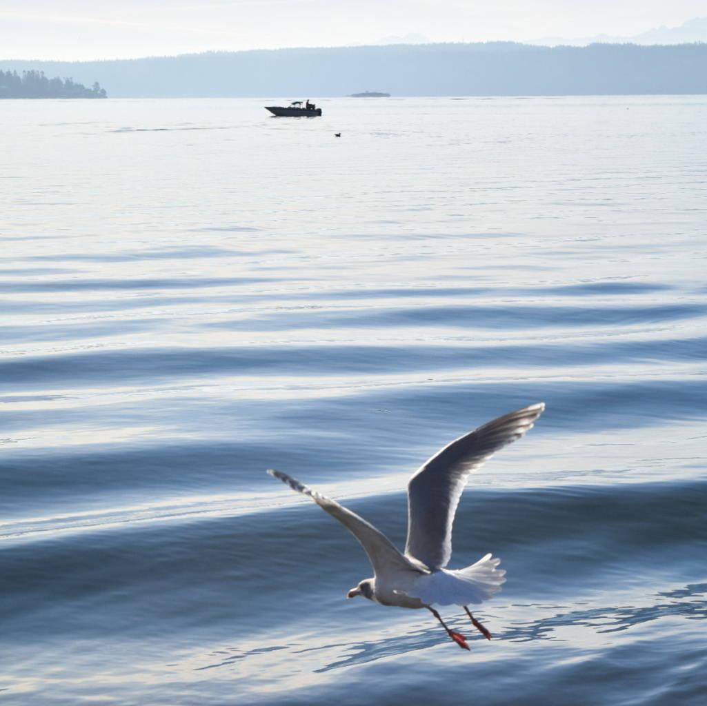 Bird and Boat on the Saratoga Passage