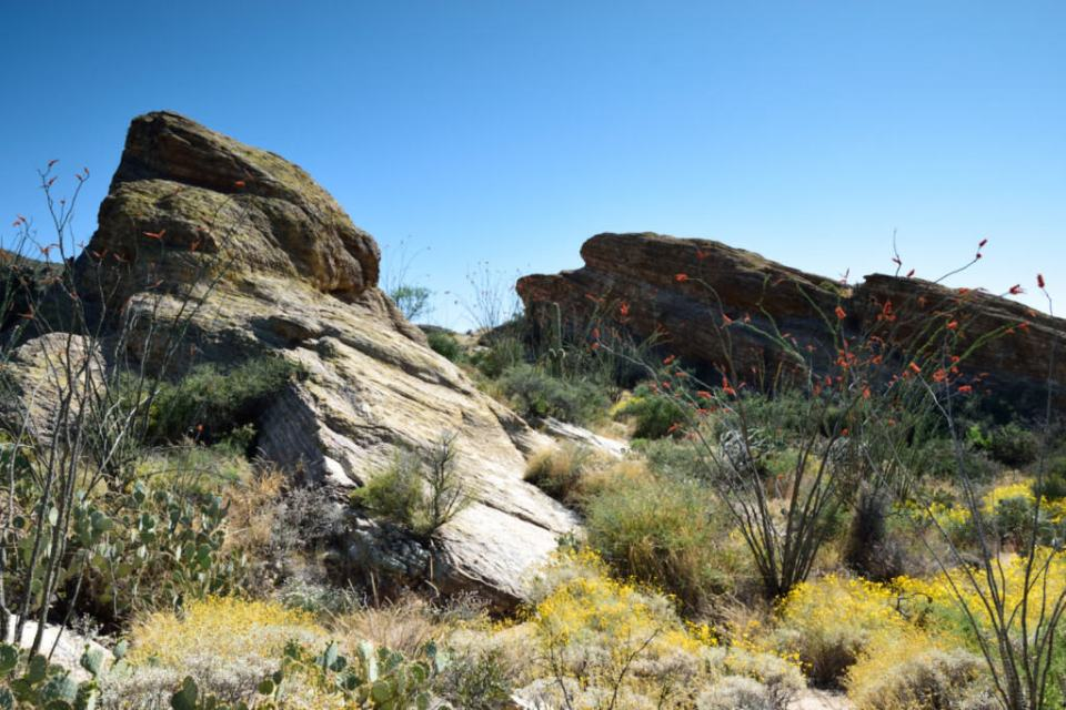 Duo Javelina Rocks at Saguaro National Park