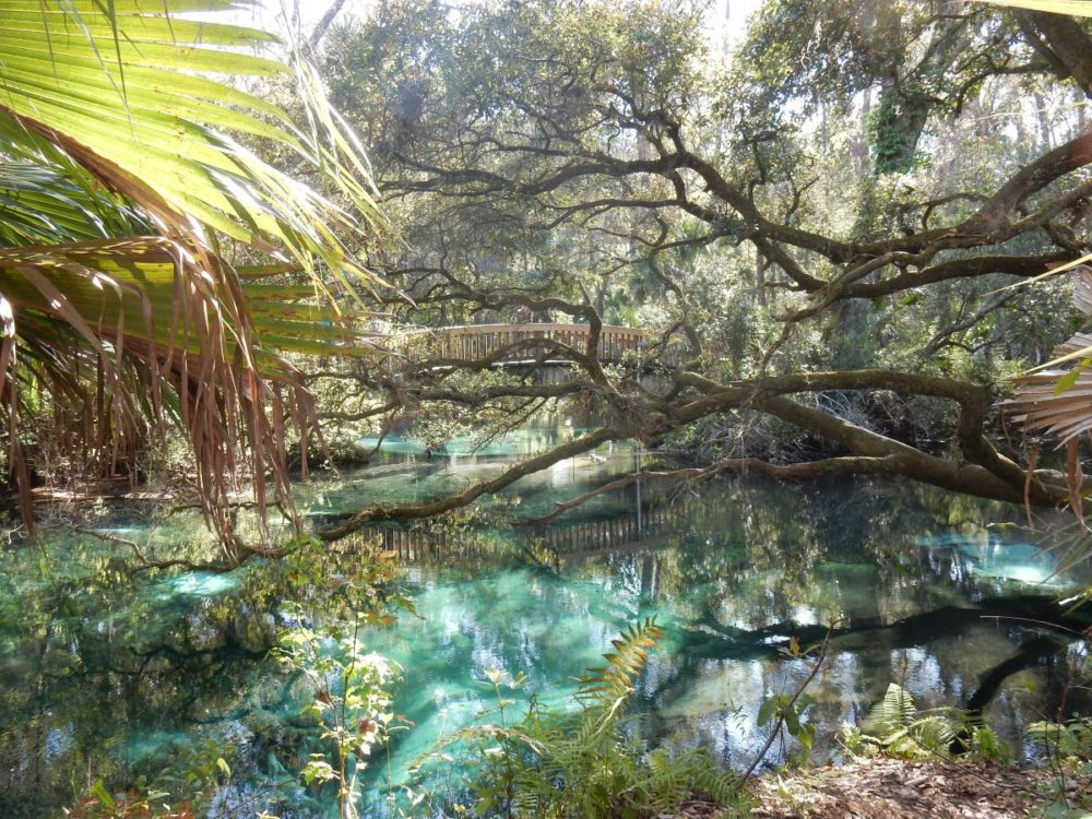 Juniper Springs In Ocala National Forest The Adventures