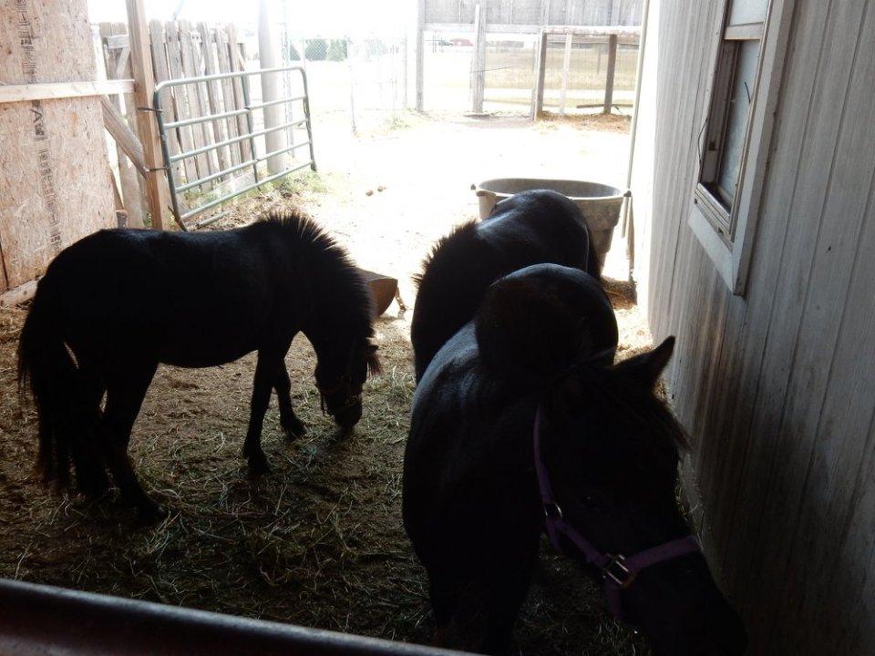 Triple-J Camper Park - Pony Shelter 2