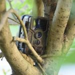 QARYYQ Wildlife Camera Tracking 16MP Live Home Security Monitor LED Night IP66 Waterproof Outdoor 1080P Field Capture Cam Infrared Wild Animal Camera