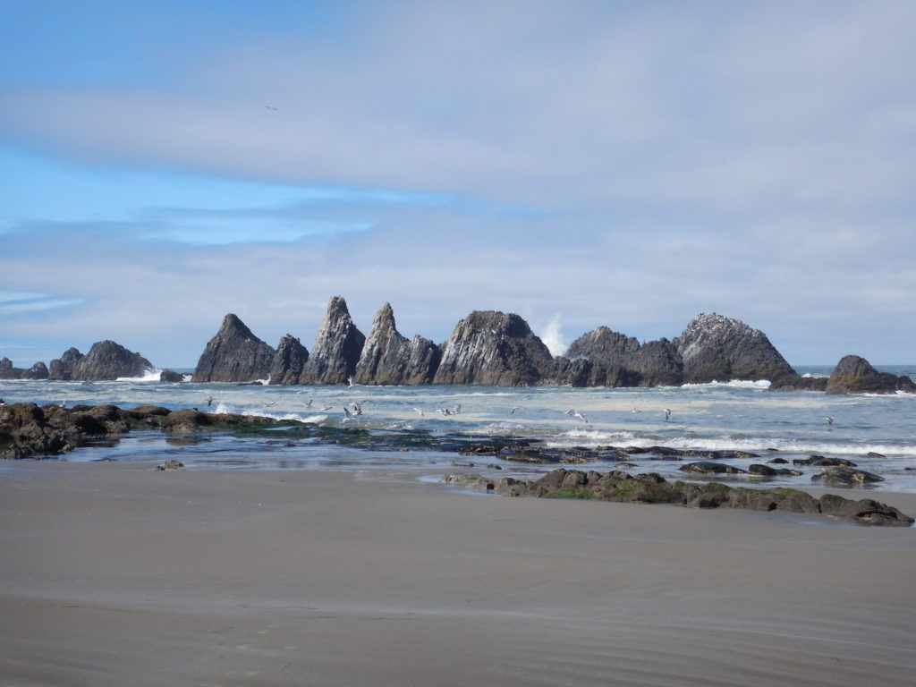 SO many seabirds here! It was one of my favorite stops on the entire coastal drive.