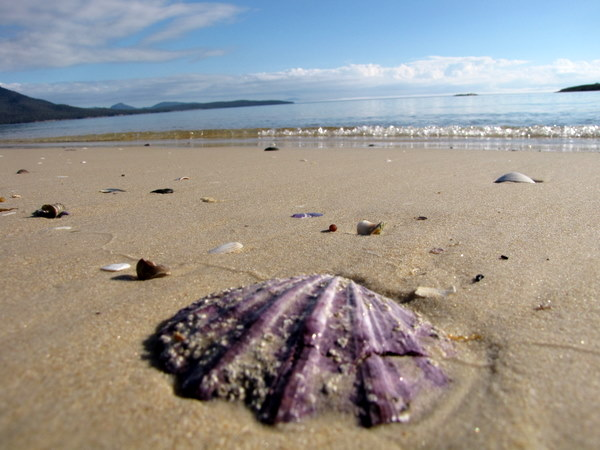 Hiking along Hazard Beach in Tasmania. Absolutely amazing