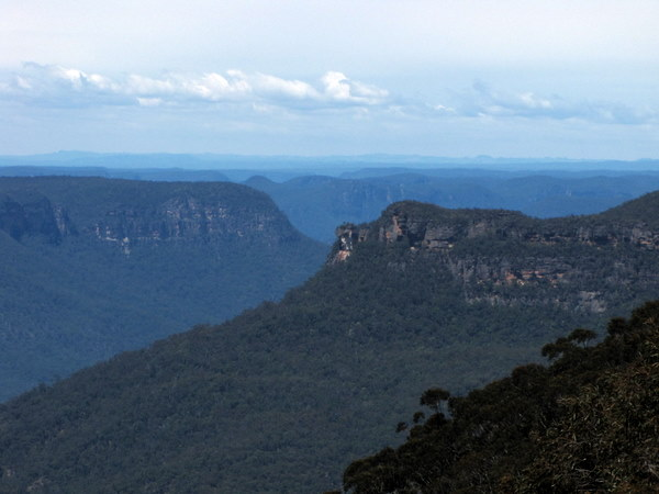The blue haze is supposedly caused from the oils of eucalyptus trees