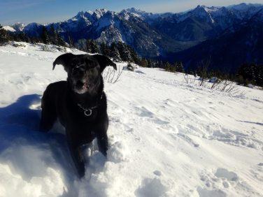 One happy recovered Jake dog!