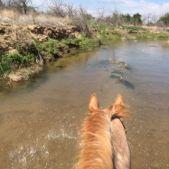 Horse Ride 2014