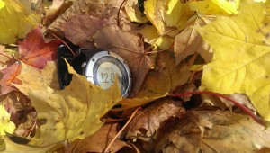 Verloren im Herbstlaub