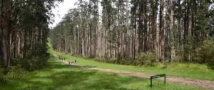 httpwww.trailhiking.com_.auwp-contentuploads201602trail-hiking-tanglefoot-track-plus-mt-st-leonards-22km.jpg