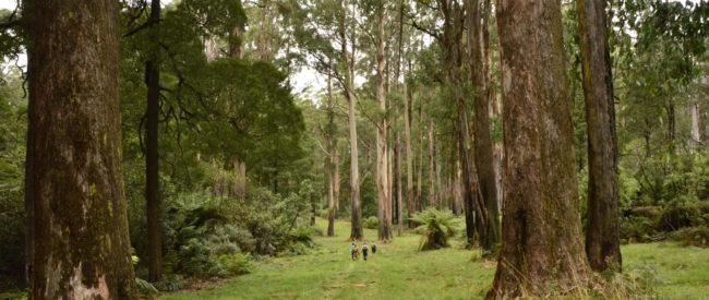 httpwww.trailhiking.com_.auwp-contentuploads201604trail-hiking-monda-track-18km.jpg