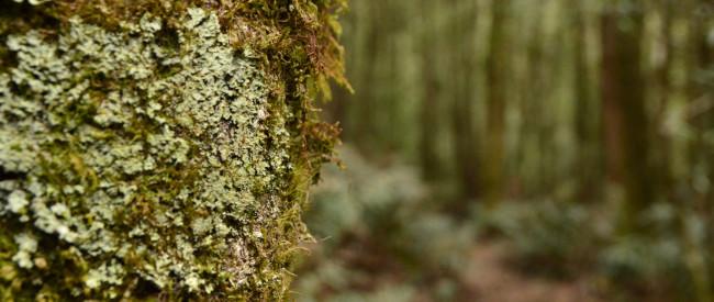 httpwww.trailhiking.com_.auwp-contentuploads201604trail-hiking-walk-into-history-ada-to-starlings-gap-via-new-ada-mill-16.jpg