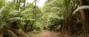 homeinvisagepublic_htmltrailhikingwp-contentuploads201608trail-hiking-wirrawilla-myrtle-gully-tanglefoot-tracks.jpg