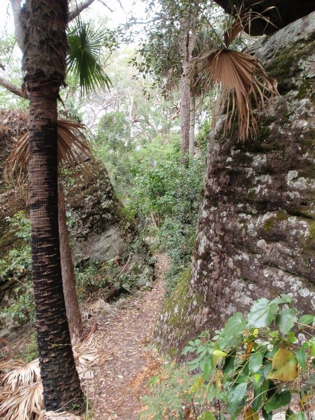 Cabbage Tree Trail