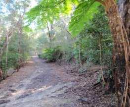Clarinda St dog walking trail