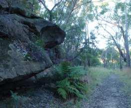 Daphne Place dog walking trail