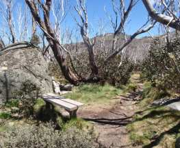 Dead Horse Gap and Thredbo River loop