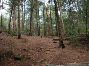 Gibberagong Track