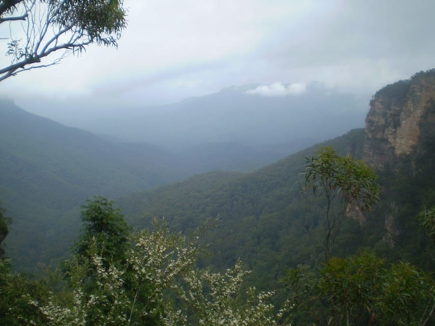 Lyrebird Lookout Loop
