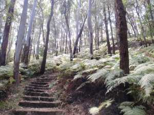 Rainforest walk to Nurrunga picnic area