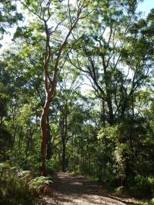 Tall Trees Circuit Walk